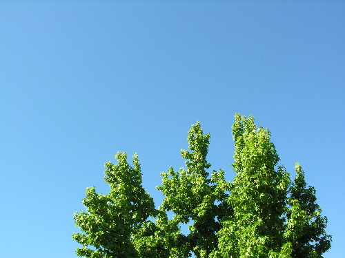 Blue_sky2