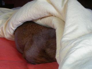 Snuggle2